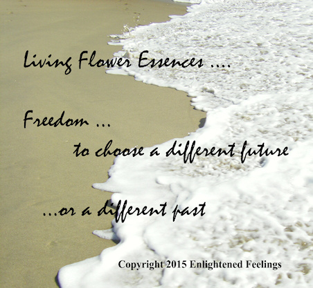 Living flower essences ... Freedom to choose a different future ... or a different past